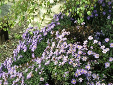 Il giardino alpino di candide - Giardini di montagna ...